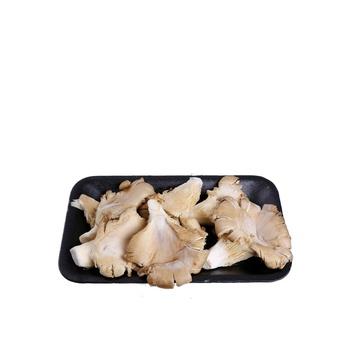 Mushroom Oyster Holland