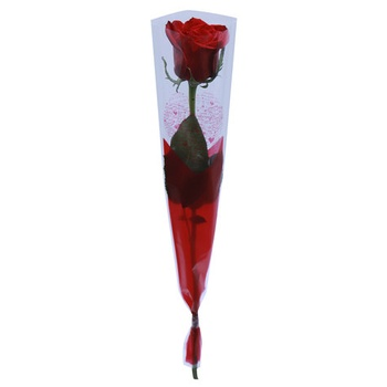 Valentine S. Red Rose  With Sleeve