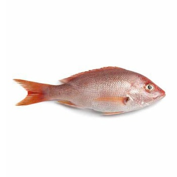 Red Snapper 800g Up