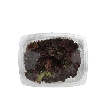 Live Lettuce Lollo Rosso