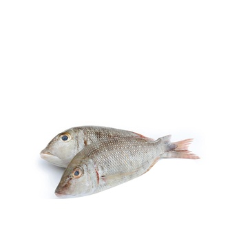 Fresh Sharry small per kg