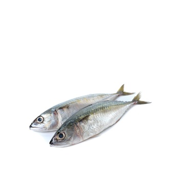 Mackerel - Medium
