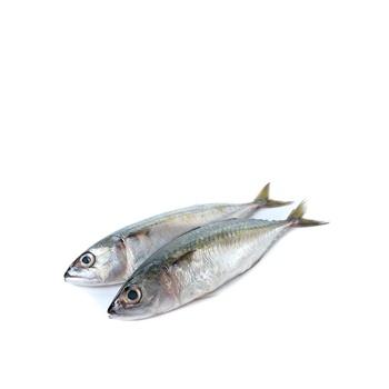 Mackerel - Medium