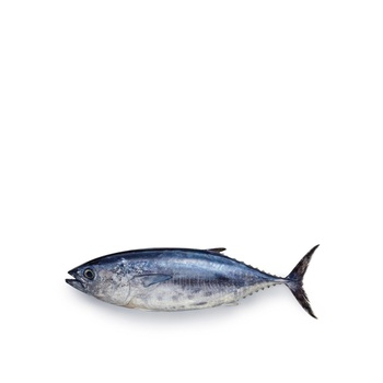 Tuna - Small