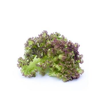Lettuce Lollorossa Holland