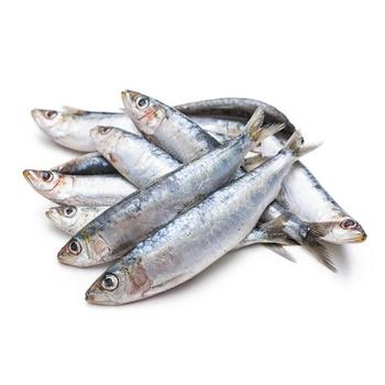Fresh  Sardine per kg