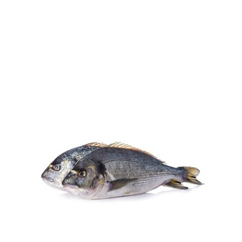 Fresh Sea Bream Fish