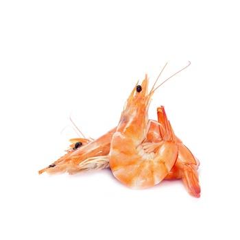 Shrimps - D