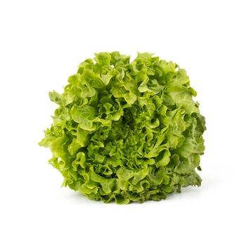 Live Lettuce Oak Leaf Green