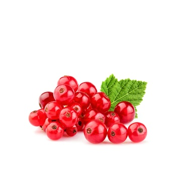Red Currant Holland 125g