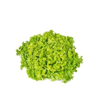 Live Lettuce Lollo Bionda