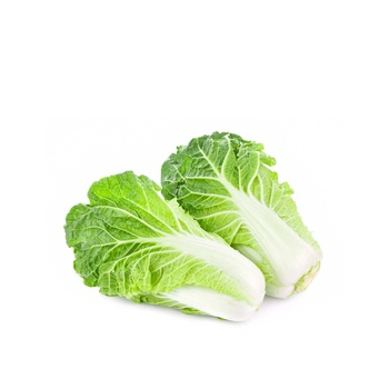 Cabbage Chinese Holland