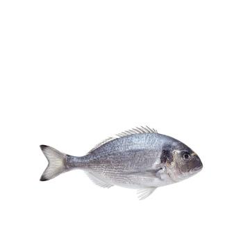 Sea Bream per kg